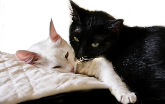 Black & White Duet  by Heather Friedman