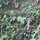Monkey See..... by Margaret Stevens