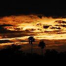 Estero Llano Grande Sonnenuntergang von Jennifer Suttle