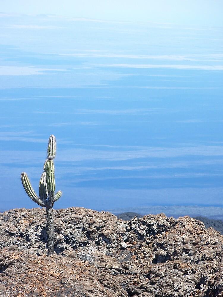 Atop a inactive volcano in the Galapagos Islands (Espanola Island) by evon