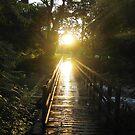 sunset by sendao