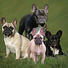 Frenchies by Cazzie Cathcart