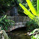 Tropical Bridgeway by Jessie Harris