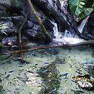 Fishy Paradise by Jessie Harris