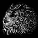 Black and White Owl by IsabelSalvador