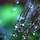 Green Mist by Sharon Johnstone
