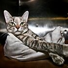 This Is Kitty! by Mark Ross