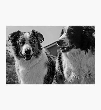 Good Boys! Photographic Print