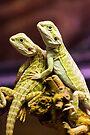 Lizards in Love by John Velocci
