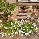 Hats And Plants by Fara