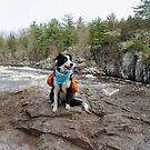 Erkunde mit einem Hund. von MelissaPhoto