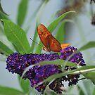 Purple Plains by Jennifer Vickers
