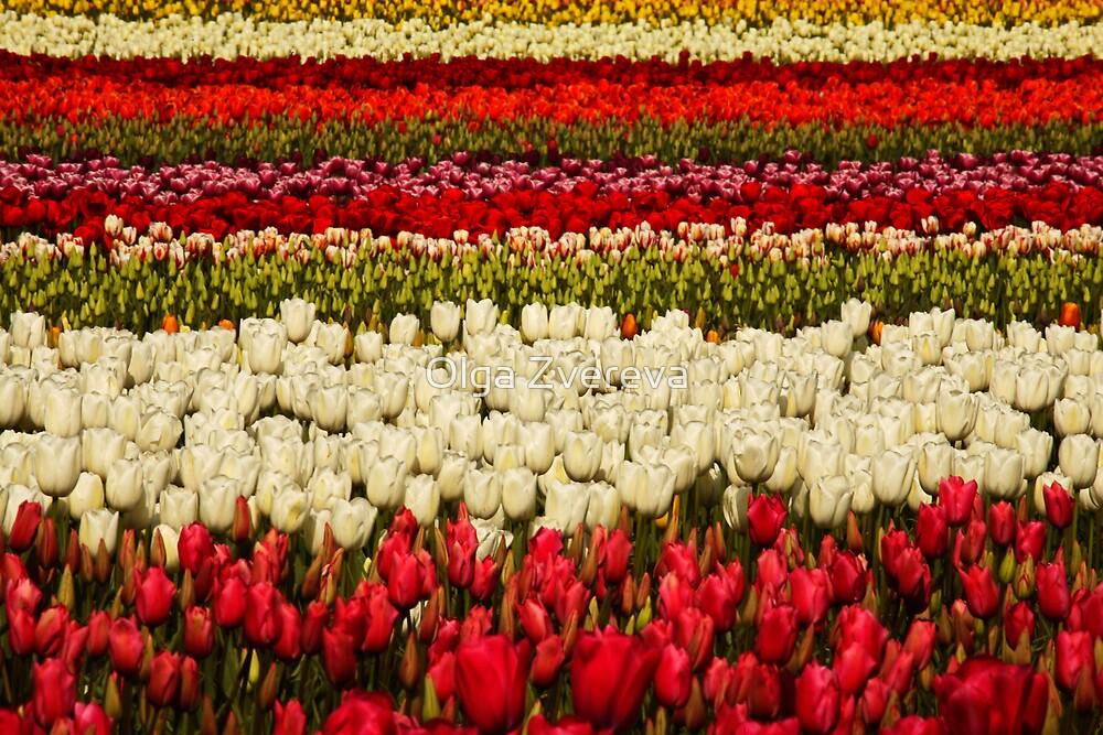 Tulips by Olga Zvereva