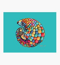 Rainbow Pangolin Photographic Print