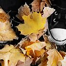 Fall 'n Stars by thinkingoutloud