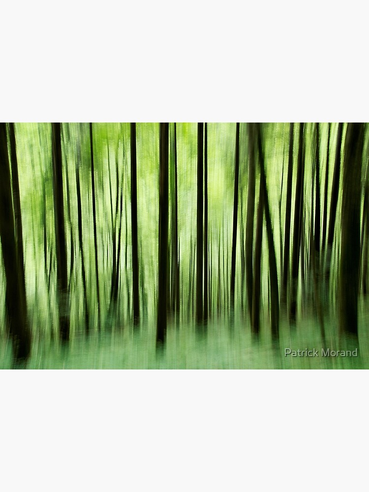 Ghost trees in Valserine forest by patmo