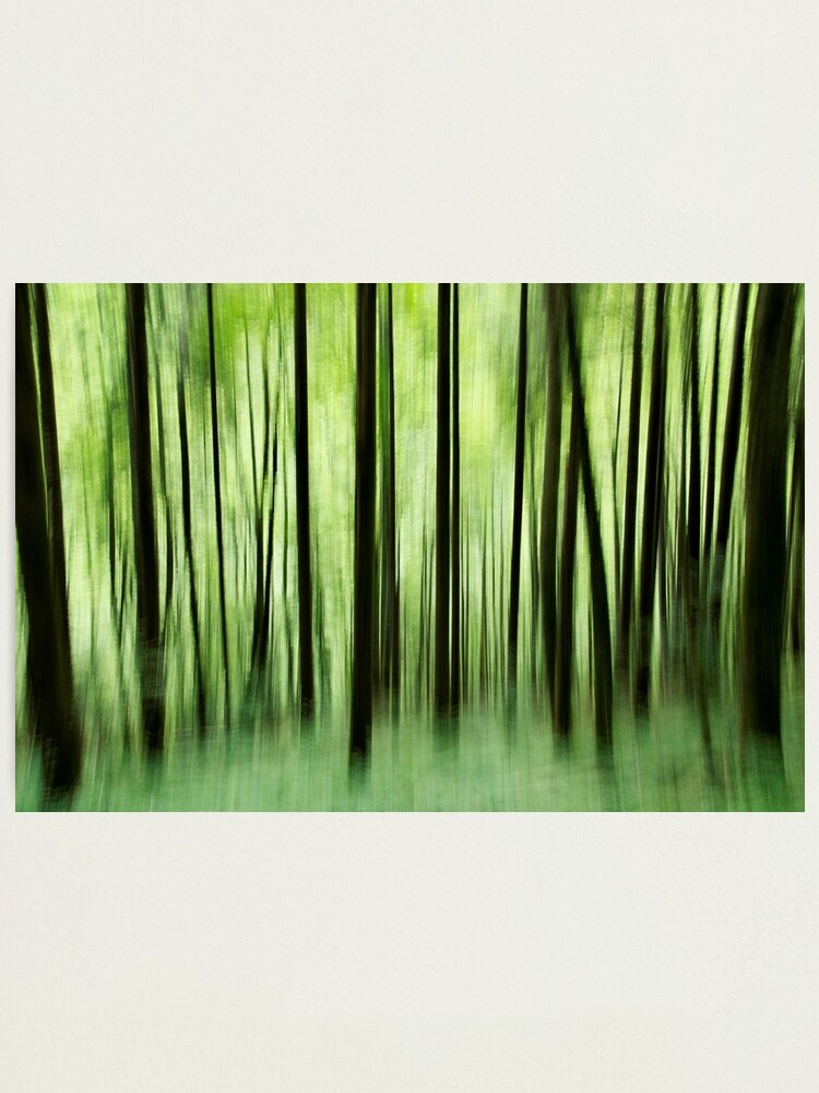 Alternate view of Ghost trees in Valserine forest Photographic Print