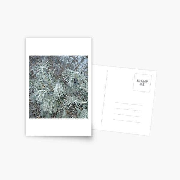 Frosty Transformation Postcard