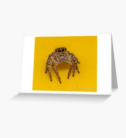 Bin Jumper Greeting Card