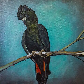 Red Tailed Black Cockatoo by afletcher