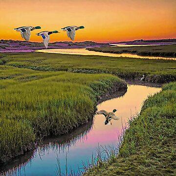 Mallard Duck by Skyviper