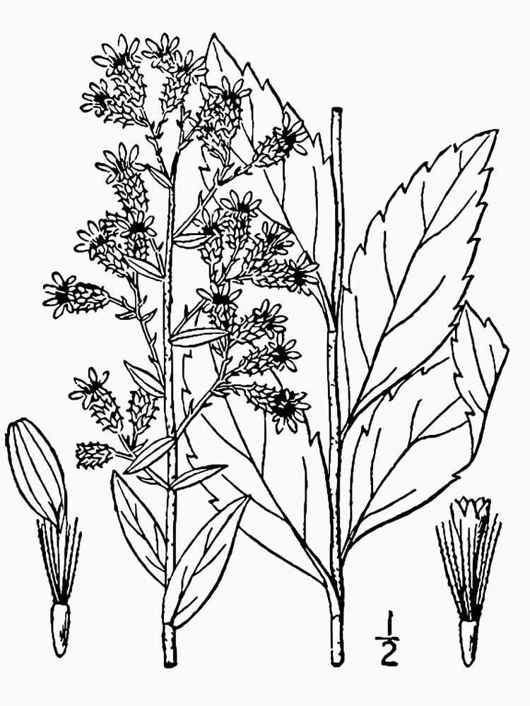 Botanical Scientific Illustration Black and White by pahleeloola