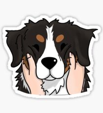 Funny Chubby Cheeks Bernese Mountain Dog Sticker