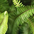 Fern Leaves by Melissa Holland