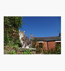 Tabby cat in cottage garden Photographic Print