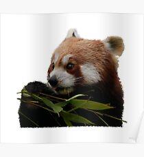 Roter Panda - Bambus Frühstück Poster