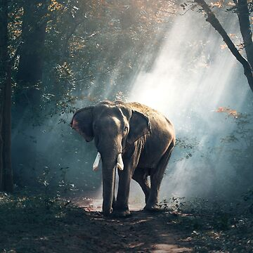 Elephant  by PhotoStore