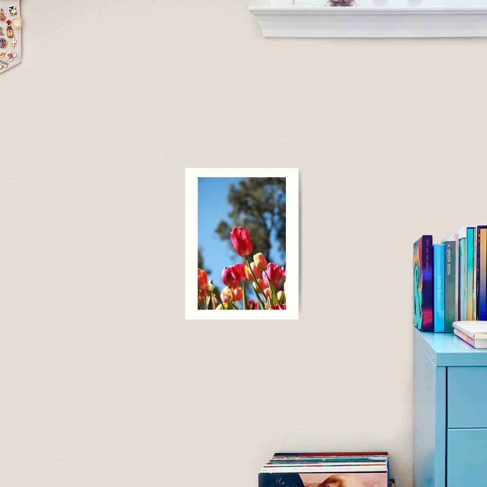 Tulips and Araluen Art Print
