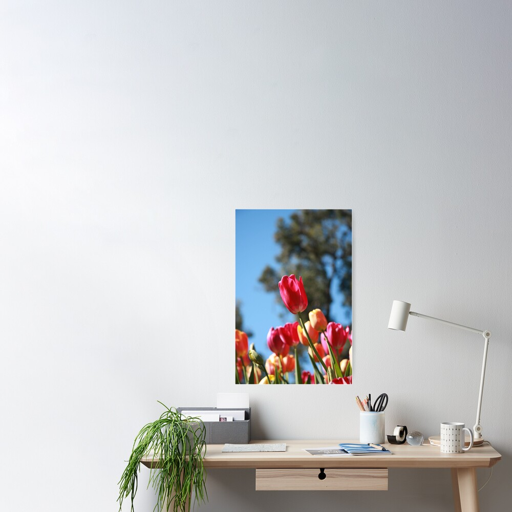 Tulips and Araluen Poster