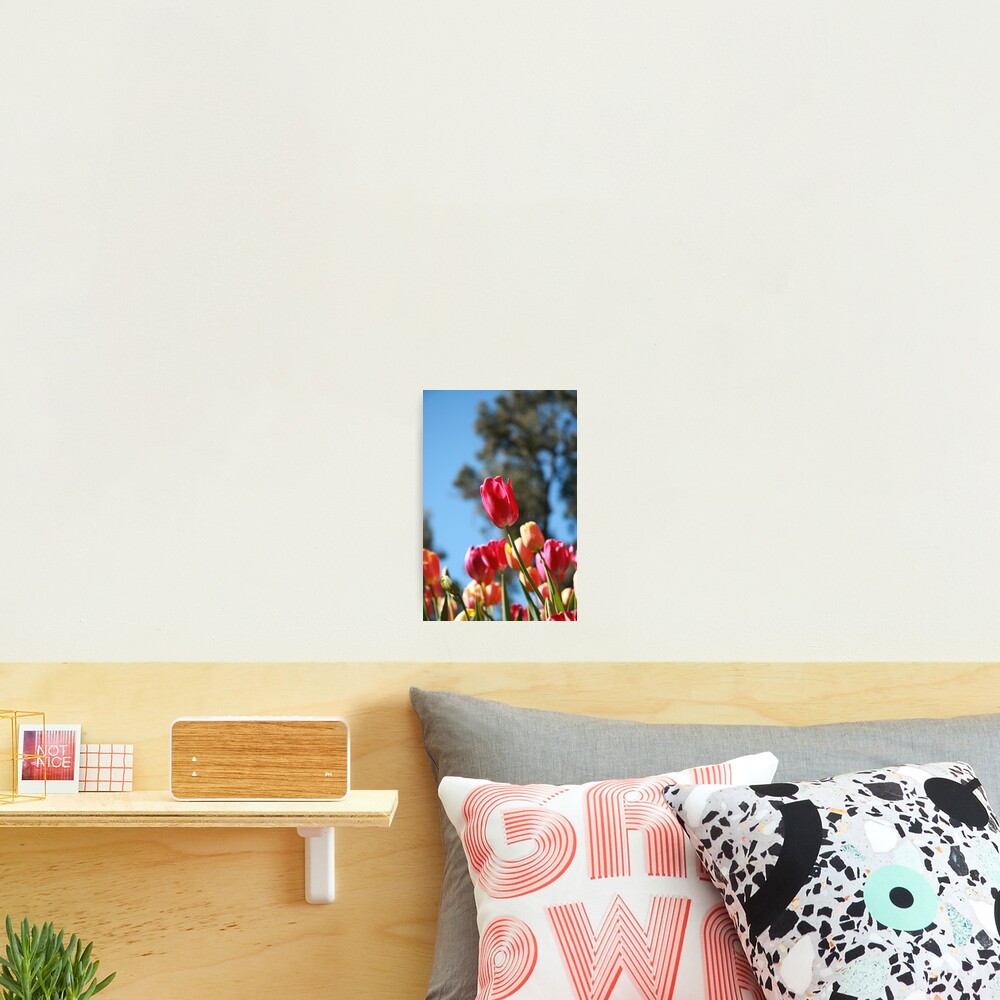 Tulips and Araluen Photographic Print