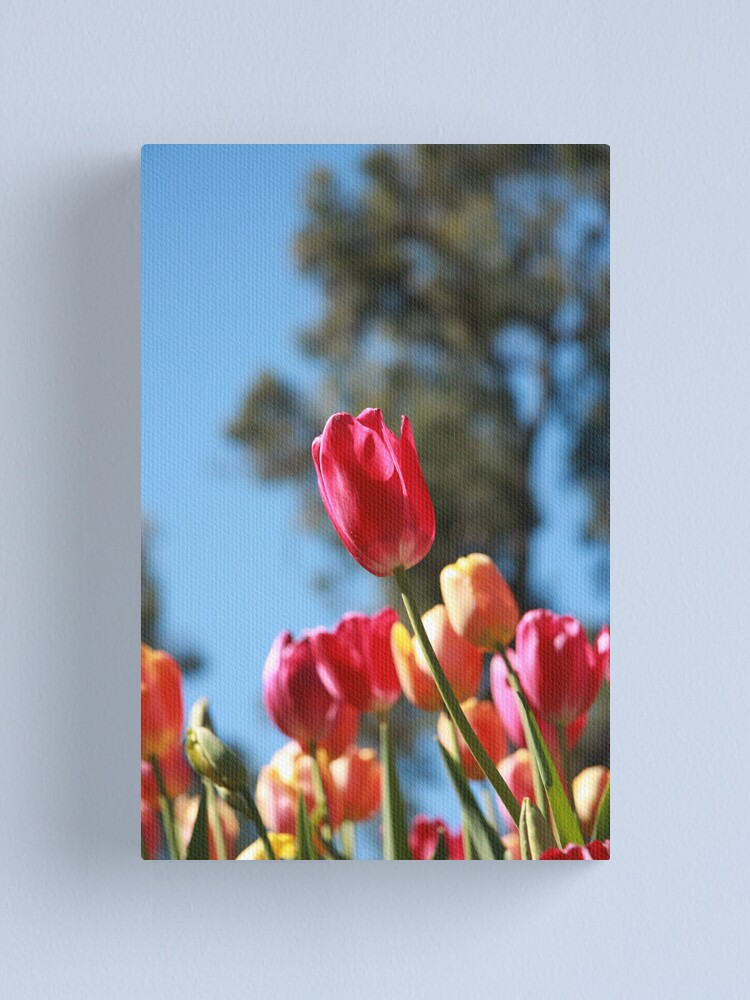 Alternate view of Tulips and Araluen Canvas Print