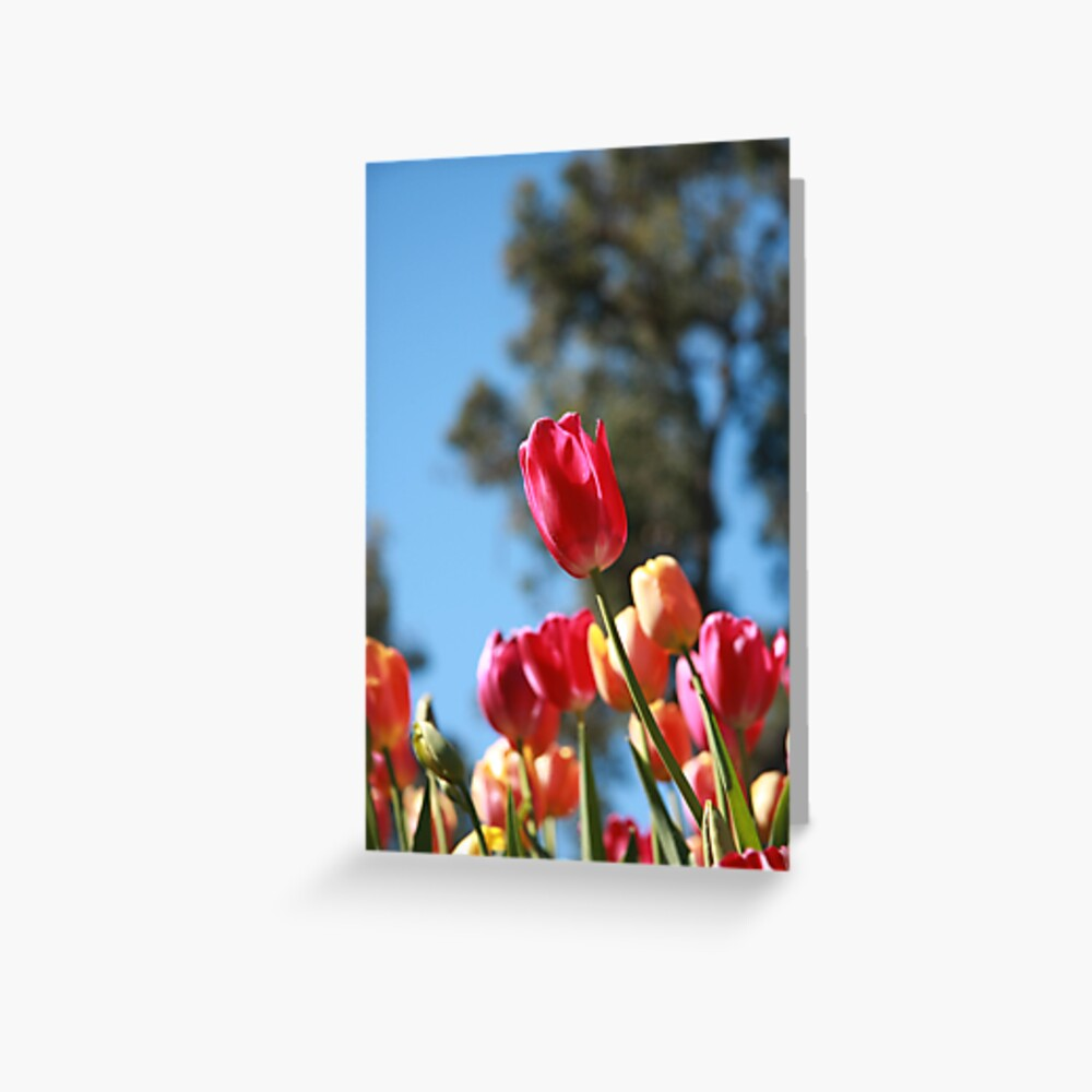 Tulips and Araluen Greeting Card