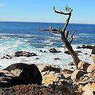 Coastal California by Cheri Sundra