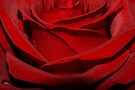 Red Rose by AnnieSnel