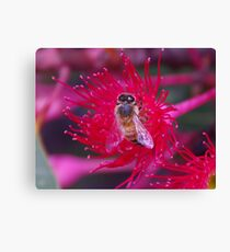 Red Bee Canvas Print