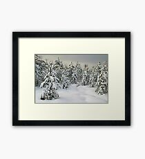 winter pine forest Framed Print