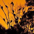 The Birds by Emjay01