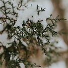 Winterabend von MelissaPhoto