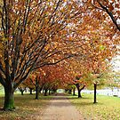 Autumn Avenues by NinaJoan