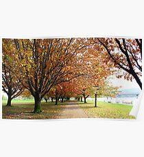 Autumn Avenues Poster
