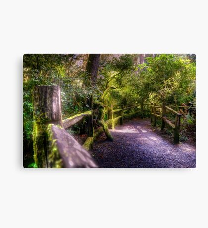 follow the path Canvas Print