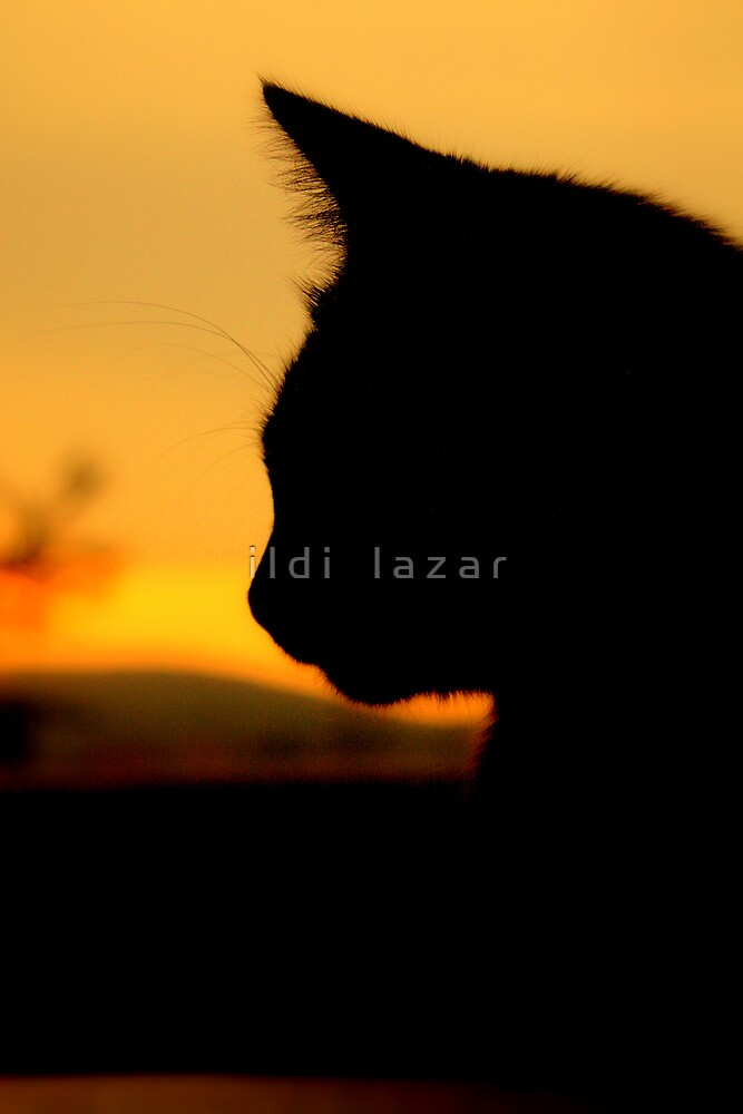 Sunset silhouette by i l d i    l a z a r