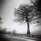 a tree in winter by annette andtwodogs