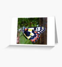 Australian Butterfly Greeting Card