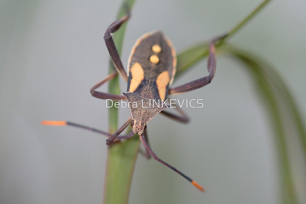 ~Bug~ by Debra LINKEVICS