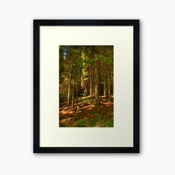 sunlight on the forest floor Framed Art Print